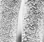 Blog Frau Wechseljahre Menopause Klimakterium Osteoporose Knochenschwund Körper Bewegung Tanz Therapie Tanztherapie Bewegungstherapie Körpertherapie Kunsttherapie Susanna Tuppinger St. Gallen Ostschweiz